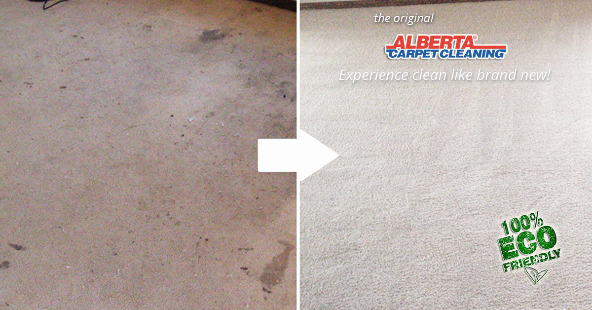 Alberta Carpet Cleaning Calgary The Carpet And